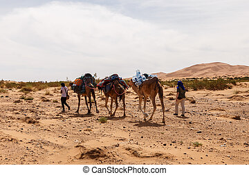 Camels caravan in the sahara desert