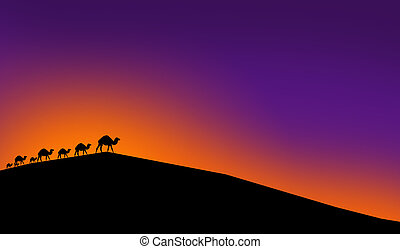 Camels in a light of sunset