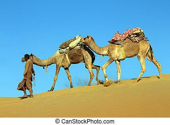 camels in desert - cameleer in desert - camels caravan on...