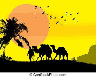 Camels in Sahara