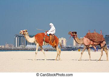 Camels walking on Jumeirah Beach, Dubai, UAE