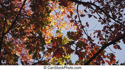 Camera circle slide with tree branches in a shot. Colorful autumn trees with multiple color shades of amazing garden. Tinted footage. Prores 422