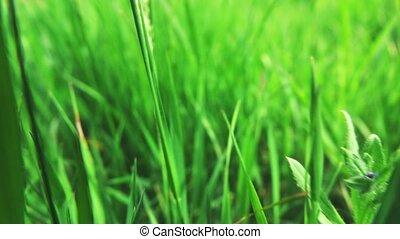 camera fly through green fresh grass, slow motion