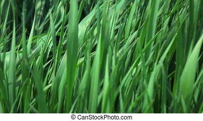 camera fly through green fresh grass, slow motion - A...