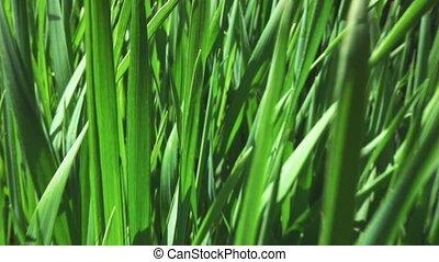 camera fly through green fresh grass, slow motion - camera...