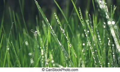 camera fly through green fresh grass with dew drops., slow motion