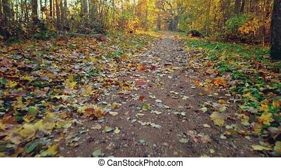 Camera flying on path with autumn leaves