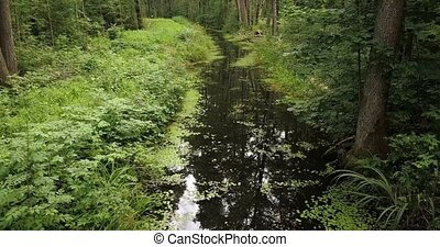 Camera focusing on forest river