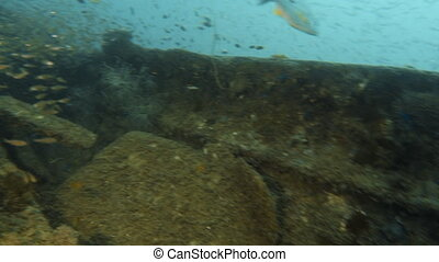 Camera glides into a shipwreck surrounded by fish