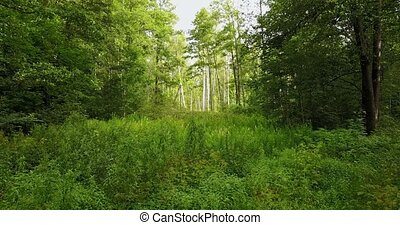 Camera goes deeper in the overgrown forest