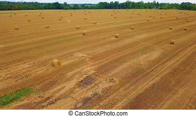 Camera goes up on the straw field