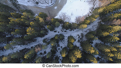 camera looking straight down over winter fir forest in sunset