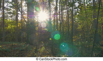 camera motion along the leaves in the forest - camera motion...