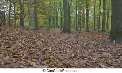 camera motion along the leaves in the forest a autumn day