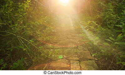 Camera Motion from Stone Path to Bright Sunlight at Background