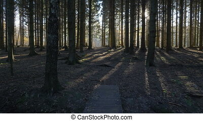 camera movement alonga a path through in a spruce forest