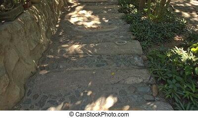 Camera Moves along Shady Stone Path between Tree Rows -...