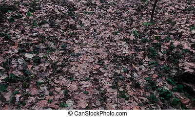 Camera moves and removes the fallen leaves in the forest....