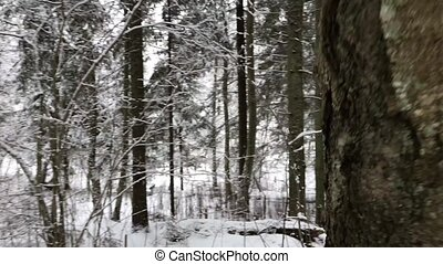 Camera moves and takes winter forest in the daytime. Video...