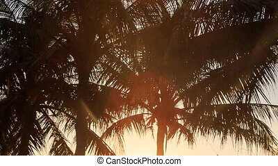 Camera Moves from Palm Silhouettes to Grass at Backlight of Sun
