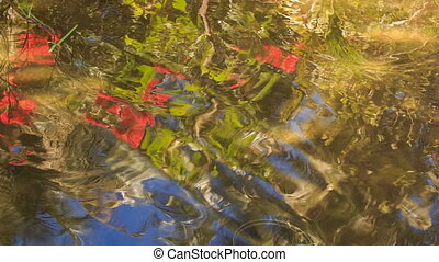 Camera Moves from Reflected Sky to Fish in Shady Place