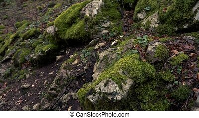 Camera Moves From The Moss To The Mother And Son