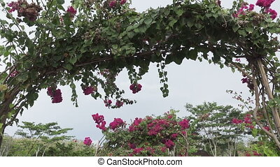 camera moves on the bridge with the arches twined a terry hibiscus