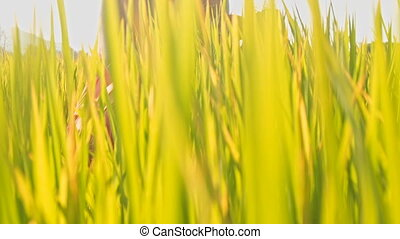 Camera Moves Through Stems Close to Girl Sitting in Field