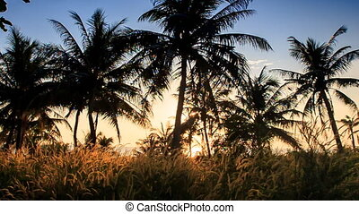 Camera Moves to Backlight Sun through Grass Palm Silhouettes