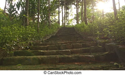 Camera Moves up Stone Staircase in Tropical Park