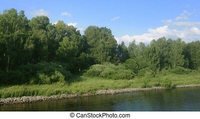 Camera moving along a river bank with a view on birch trees ...