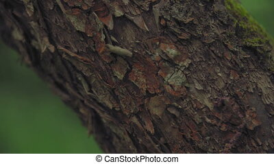 Camera pans through the texture of a tree trunk against a forest background