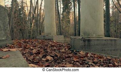 Camera shows autumn panorama