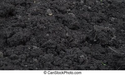 Camera slide over clean dark soil, ground at the beginning of spring close-up footage.