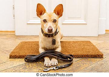 caminata, puerta, perro, esperas