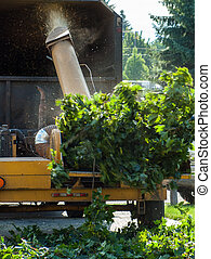 caminhão, rasgando, madeira, árvore, chipper