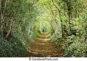 caminho, alinhado, árvore