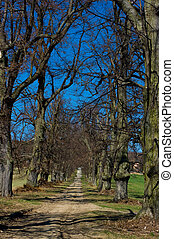 caminho, alinhado, avenida, de, árvores.