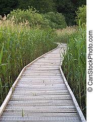 caminho, andar, sobre, pântano