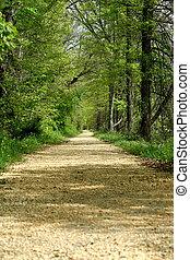 caminho, através, a, árvores