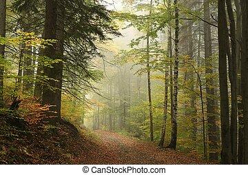 caminho, através, a, floresta outono