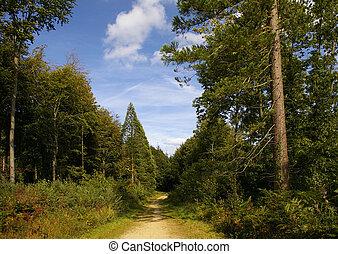 caminho, através, a, madeiras