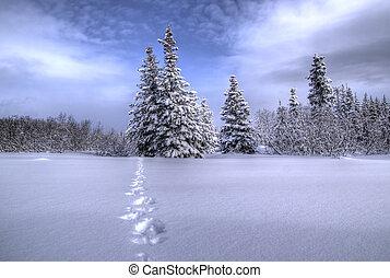 caminho, através, neve