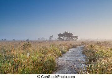 caminho, através, pântano, em, nebuloso, verão, manhã