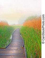 caminho, boardwalk, pântano