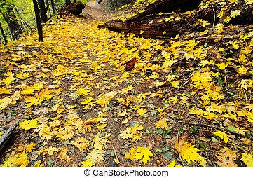 caminho, coberto, com, dourado, folhas