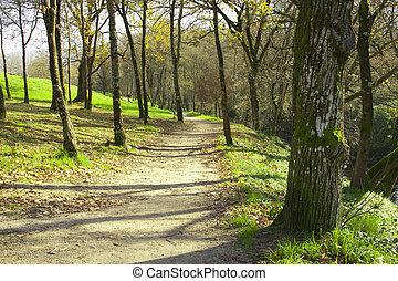 caminho, em, a, floresta