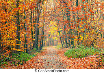 caminho, em, a, floresta outono