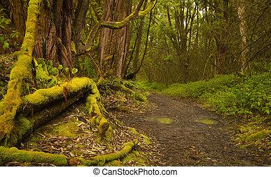 caminho, em, a, floresta tropical