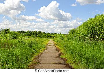 caminho, em, a, parque verde